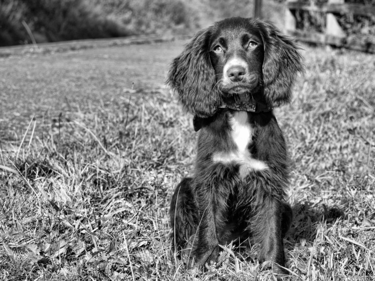 Penny by What a Picture Photography