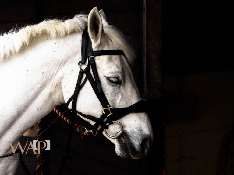 Evie at an equine session by What a Picture Photography