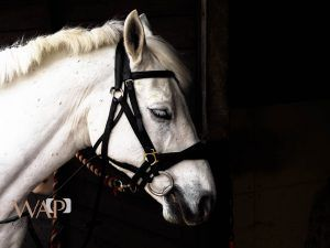 Photographs -Evie at an equine session by What a Picture Photography