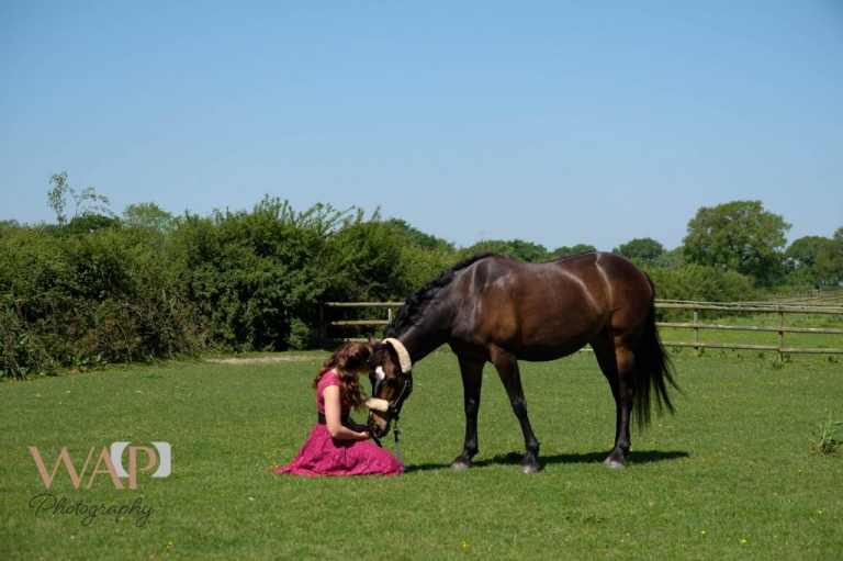 equine portraiture in the sun by What a Picture photography